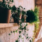 Brick interior wall with plants; MGSD living wall interior design trend