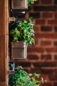 Herbs planted in vertical wall planter; MGSD living wall interior design trend